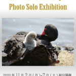 Asami Tsuchiya Photo Solo Exhibition